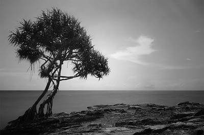komposisi foto landscape negative space